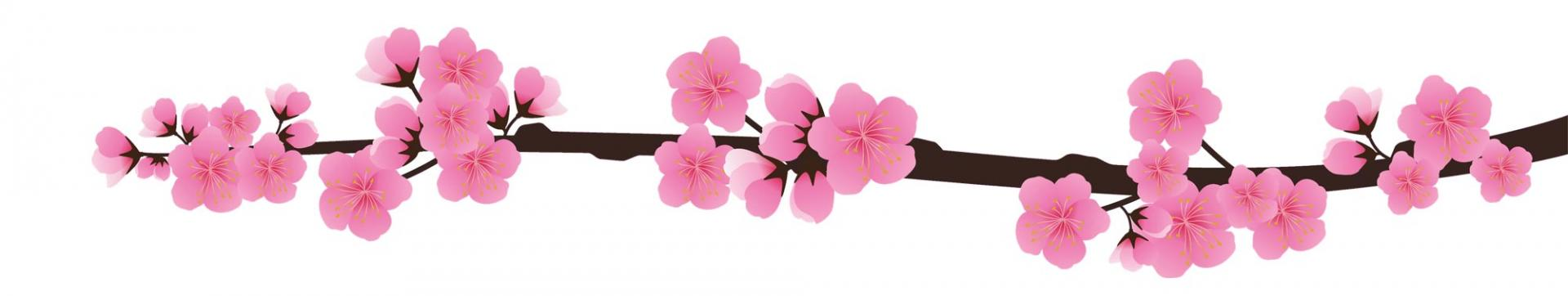 Sakura pour en tete haut png