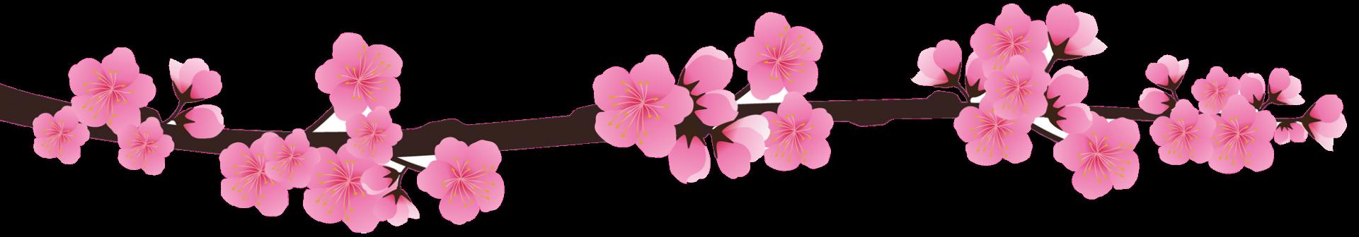 Sakura pour en tete bas png