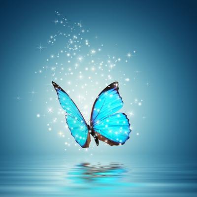 Transformez votre vie grace a la loi de l attraction